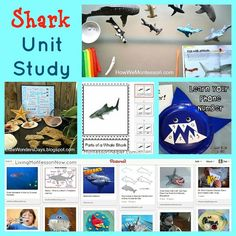This would be a perfect time for a Montessori-inspired unit (or mini-unit) on sharks, a topic many children find fascinating.