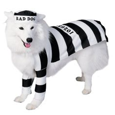 Rubies Costume Halloween Classics Collection Pet Costume, Prisoner, Large - http://www.thepuppy.org/rubies-costume-halloween-classics-collection-pet-costume-prisoner-large/