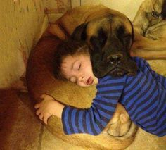 The mutual pillow. Best friends for life...