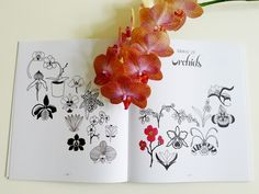 Sketchbooks to draw and tulip on pinterest - Dessiner une tulipe ...