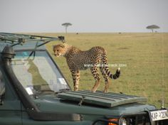 I am right here....... http://www.natural-track.com/safaris/