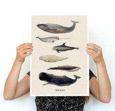 Whales A3 size poster animal art Wall art Nursery art