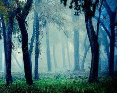 Fairytale - Foggy Woodland Photo - Magical Photography - Blue Mystical Forest - Decorative Print - Slightclutter on Etsy