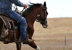 Purebred Arabian, son of Rhocky Rhoad, Rhoad Rhave, barn name Harley.  2011 Purebred Arabian stallion www.chasenit.com