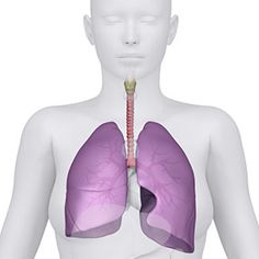 What Is Idiopathic Pulmonary Arterial Hypertension? Pulmonary hypertension (PH) is a condition that causes increased blood pressure in the pulmonary arteries and the right side of the heart. Reducing Blood Pressure, Natural Blood Pressure, Healthy Blood Pressure, Blood Pressure Remedies, Lower Blood Pressure, Pulmonary Hypertension, Pulmonary Fibrosis, Juice Fast, Health