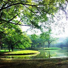 代々木公園 (Yoyogi Park) in 渋谷区, 東京都