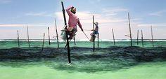 The stick fishermans of Welligama in Sri Lanka.