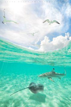 500px / Bora Bora - French Polynesia by Jesse Estes