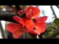 Primăvara în grădina mea | Flori şi animale | ARDAtotal - YouTube Hiking Trails, Youtube, Plants, Instagram, Plant, Youtubers, Walking Paths, Youtube Movies, Planets