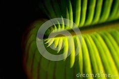 Green leaf by Graciela Rossi, via Dreamstime