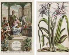 COMMELIN, Jan (1629-1692) and CASPAR (1668-1731). <I>Horti Medici Amstelodamensis rariorum tam orientalis, quam Occidentalis Indiae, aliarumque peregrinarum Planaturm magno studio... Beschryvinge en curieuse Afbeeldingen van rare vreemde Oos- West-Indische en andere gewassen.</I> Amsterdam: R. & J. Blaeu, 1697-1701.<br><br>2 volumes, 2 o (395 x 252 and 380 x 252 mm). Latin half-titles, hand-colored engraved frontispieces, Latin title-pages printed in red and black followed by Dutch…
