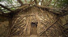 Dünyanın en ilginç ağacı