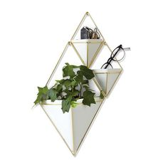 Umbra Trigg Hanging Planter Vase & Geometric Wall Decor Container - Great For Succulent Plants, Air Plant, Mini Cactus, Faux Plants and More, White Ceramic/Brass (Large) Faux Succulents, Faux Plants, Succulent Plants, Small Indoor Plants, Mini Cactus, Modern Planters, Geometric Wall, Geometric Shapes, Hanging Planters