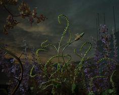 "DARK BEAUTY: Daniel Shipp's ""Botanical Inquiry"""