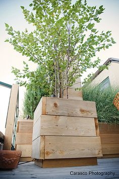 Custom Container for Birch Tree on Roof Deck