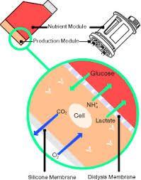 cell culture dialysis membrane - Google 검색