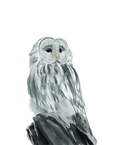 MCC student digital painting - owl Digital Drawing, Drawing Examples, Drawings, Painting, Bird Drawings, Artwork, Digital Painting