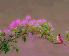 Bird singing to the spring flowers.