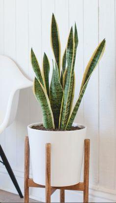 Simple Planter