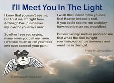"""Pet Loss Poem """"I'll Meet You In The Light"""" Written by Maureen Bauer. In Loving Memory of D'Arcy."""