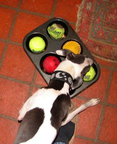 DIY Dog puzzle, hide a treat under tennis balls in a muffin pan
