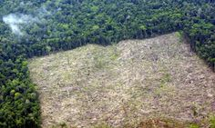 Rate of deforestation in Indonesia overtakes Brazil. Indonesia lost 840,000 hectares of forest in 2012 compared to 460,000 hectares in Brazil, despite its forest being a quarter the size of the Amazon rainforest.