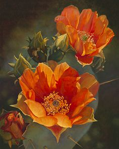Persimmon Prickly Pear II by Lauren Knode Giclee Print ~ x Cactus Painting, Cactus Art, Cactus Flower, Flower Art, Watercolor Succulents, Cacti And Succulents, Art Floral, Agaves, Desert Art