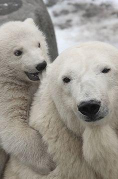 Polar Bear w baby