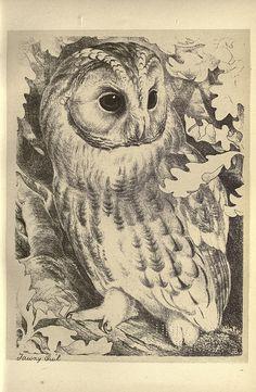 1895 by BioDivLibrary, via Flickr