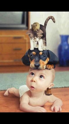 Funny pictures about Cutie Patootie, tagged with awesome, cutie, kids, pets posted in Gags So Cute Baby, Cute Baby Cats, Cute Kids, Cute Babies, Baby Pets, Animals And Pets, Baby Animals, Funny Animals, Cute Animals