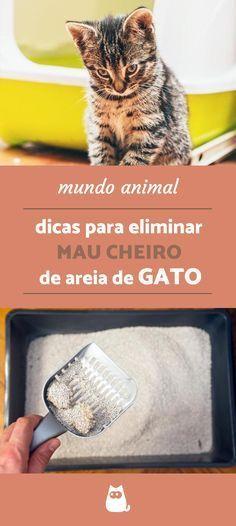 Eliminar o MAU CHEIRO DA AREIA DO GATO é possível! odor de amônia? Nunca mais! Confira as dicas do PeritoAnimal e fique ligado nos melhores truques para tutores de peludos! #animais #gatos #limpeza #higiene #areiadegato #casa