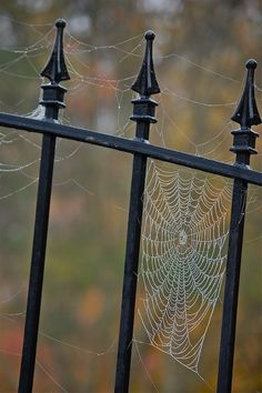 Spider web in fall ~ Metal Gate Samhain, Spider Art, Spider Webs, Gates, Witch Cottage, Itsy Bitsy Spider, Fall Halloween, Homemade Halloween, Happy Halloween