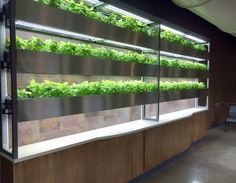The Chef's Wall Garden makes growing edible plants easy.  The product was specifically designed to cater to restaurant and academic institut...
