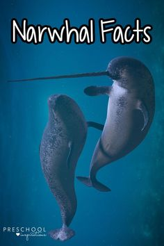 Your kids will love these amazing animal facts about narwhals! Did you know these animal facts about the unicorn of the seas? Animal Facts For Kids, Fun Facts For Kids, Fun Facts About Animals, Ocean Lesson Plans, Sea Animal Crafts, Unique Facts, Narwhals, Potty Training Tips