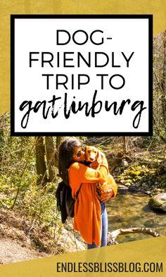 Dog-Friendly Trip to Gatlinburg Tennessee Endless Bliss Gatlinburg Trails, Gatlinburg Tennessee Restaurants, Gatlinburg Vacation, Tennessee Vacation, Taking Dog, Dog Friendly Hotels, Dog Stroller, Dog Travel, Travel Tips