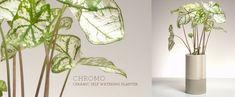 Chromo ceramic self watering planter