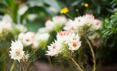 White flower | by anastasia r