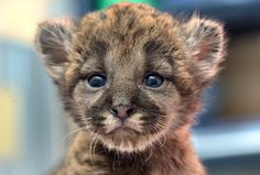 THIS CUB IS SO DANG ADORABLE