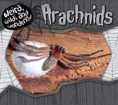Arachnids (Weird, Wild, and Wonderful) by Julie Murphy https://www.amazon.com/dp/1433935708/ref=cm_sw_r_pi_dp_x_S0D3ybQ33WBQX