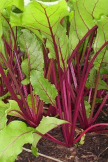 10 vegetables that grow in shade, not that there's much of that at our new place.
