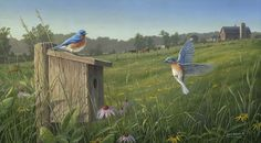 """Nesting Bluebirds""  by Jim Hautman http://www.decoyswildlife.com/gallery/JimHautman/index.html"