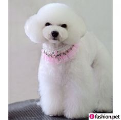 Pink & White Lace Luxury Dog Collar-A014 Pet accessories wholesale, style pet collar collection available for pet salon with discount from ifashion.pet pet collar wholesaler.