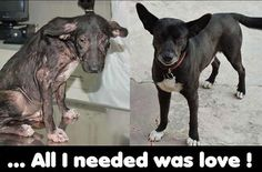 Rescued dog: before  and after.    awww this is so sad. people need t stop being mean to animals.