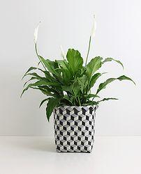 PLANT & STORAGE BOX (BLACK)