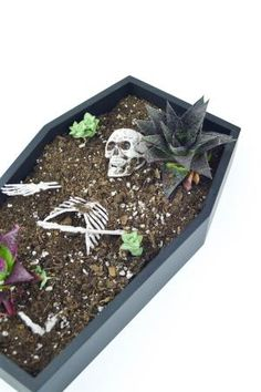 20 Spooky Skull DIYs Perfect For Halloween: DIY Succulent Coffin Planter