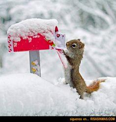 Ardilla revisando su correo