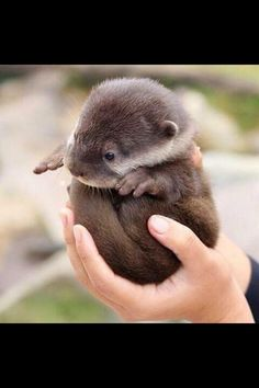 baby river otter - TOO CUTE!