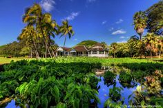 Moanalua Gardens, Oahu | Hawaii Pictures of the Day