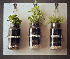 old jar herb garden!