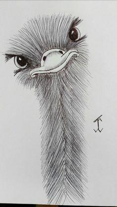 AnimalsOstrich emu ostrich drawing draw pen art Source by haakkat - pencil-drawings Bird Drawings, Pencil Art Drawings, Cool Art Drawings, Easy Drawings, Drawing Sketches, People Drawings, Disney Drawings, Cool Simple Drawings, Pencil Sketches Easy